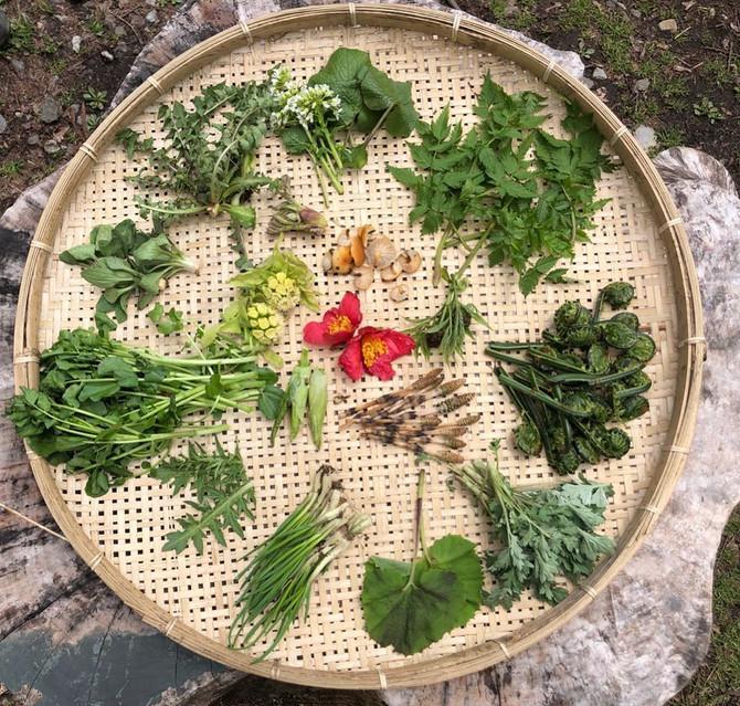 山菜の種類が増えてきました!