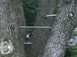 Tree Bracing Arlington, TX