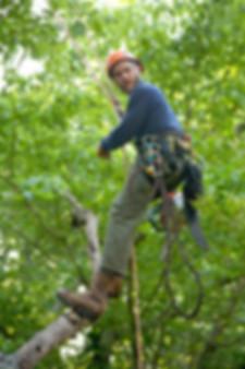 Ponder Tree Care