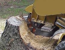 Stump Removal Mesquite TX