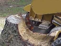 Stump Removal Flower Mound TX