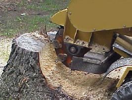 Stump Removal Copper Canyon TX