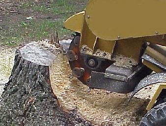 Stump Grinding - Stump Removal