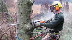 Trophy Club Tree Removal