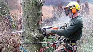 Arlington Tree Removal