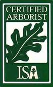 Arborist Plano
