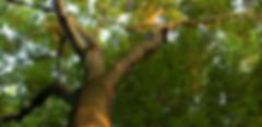 Ponder Tree Service