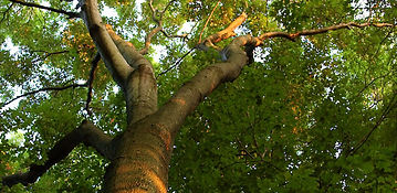 Local Tree Service