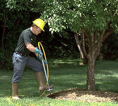 Lewisville Tree Fertilizing