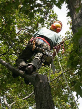 Tree Maintenance