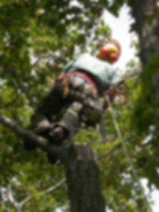 Ponder Tree Maintenance