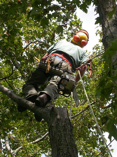 Carrollton Tree Care