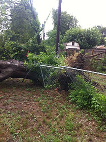 Picture of tree that has fallen on fence
