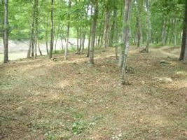 Lot Clearing | Land Clearing