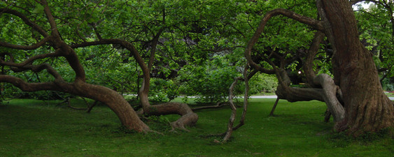 Tree Service Ponder, TX