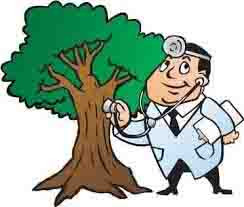 Little Elm Tree Surgeon