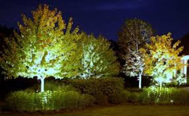 Picture of yard with yard lights shining on trees