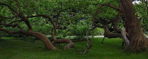 Tree Care Addison, TX