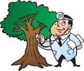 Copper Canyon Tree Surgeon