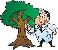 Aubrey Tree Surgeon