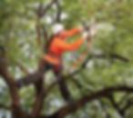 Bedford Tree Pruning