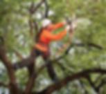 Aubrey Tree Trimming