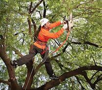 Garland Tree Trimming