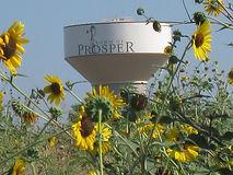 Prosper Texas Tree Service
