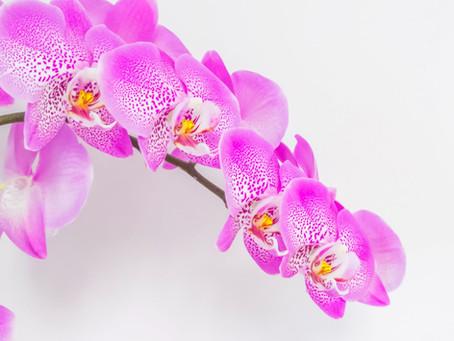 La orquídea, flor nacional de Colombia con potencial de exportación