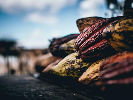 Exportaciones colombianas de cacao en el primer semestre de 2019 y 2020.