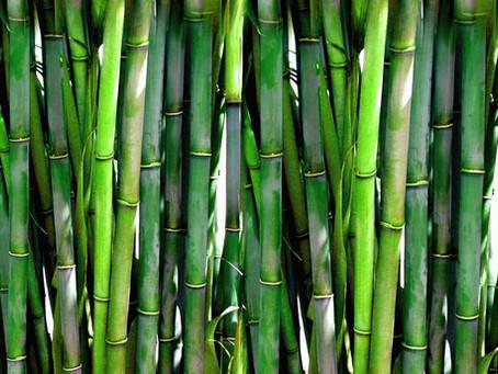 Así se comportaron las exportaciones de bambú en Colombia, entre enero de 2020 y febrero de 2021