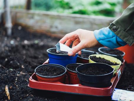 Con una caída del 8,12% cierran las importaciones de semillas de tomate entre enero y junio de 2021
