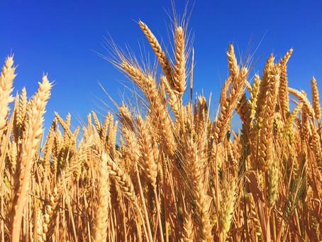 Top 5 empresas importadoras de trigo en Colombia en 2020