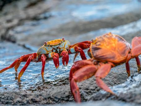 Importaciones de cangrejos en 2019 y 2020