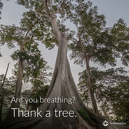 thank a tree.jpg
