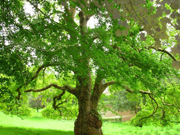 Alain Bancquart - Le grand calcul des arbres