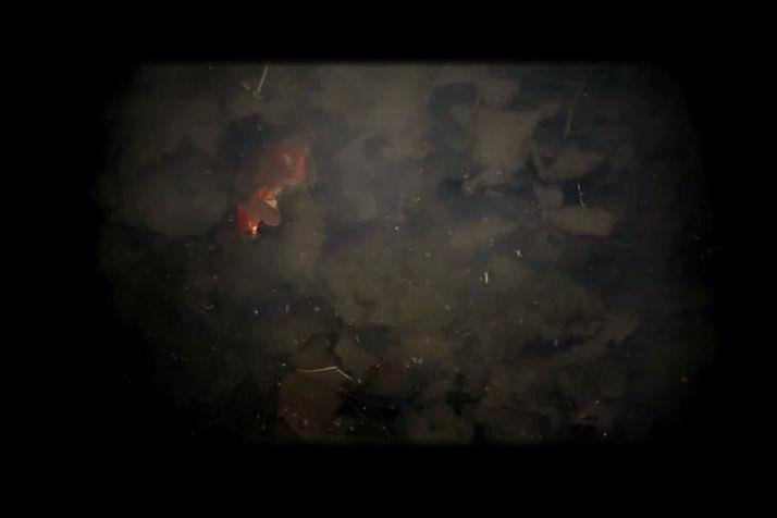 Alain Bancquart Regarde la rivière