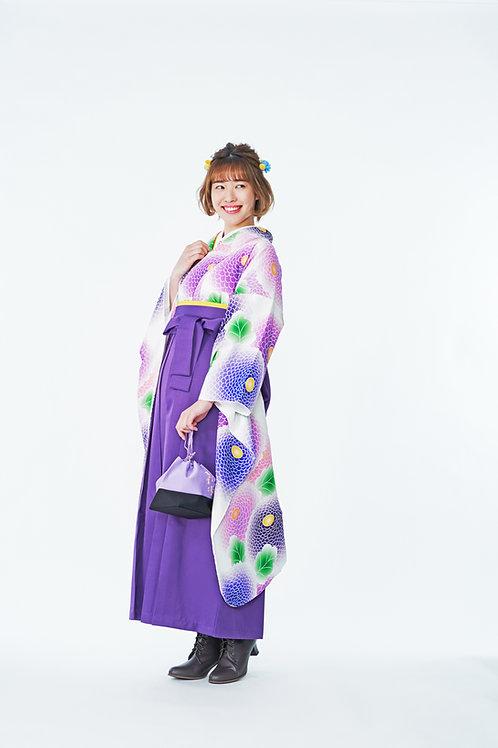 ポンポン菊 青紫
