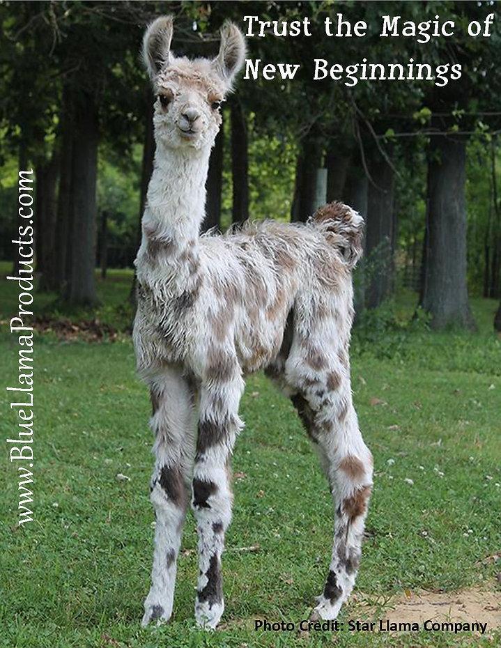 New Beginnings AD.jpg