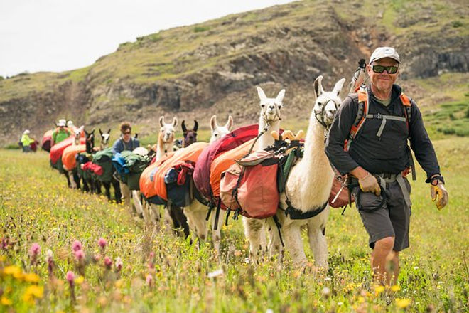 we-train-all-our-llamas.jpg