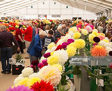 gettyimages-527479172-1024x1024.jpg