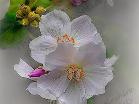 03 Blossom.jpg