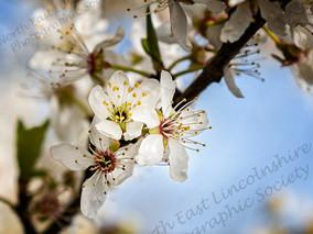 06 Each Little Flower that opens.jpg