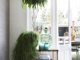 Our plants on VT wonen