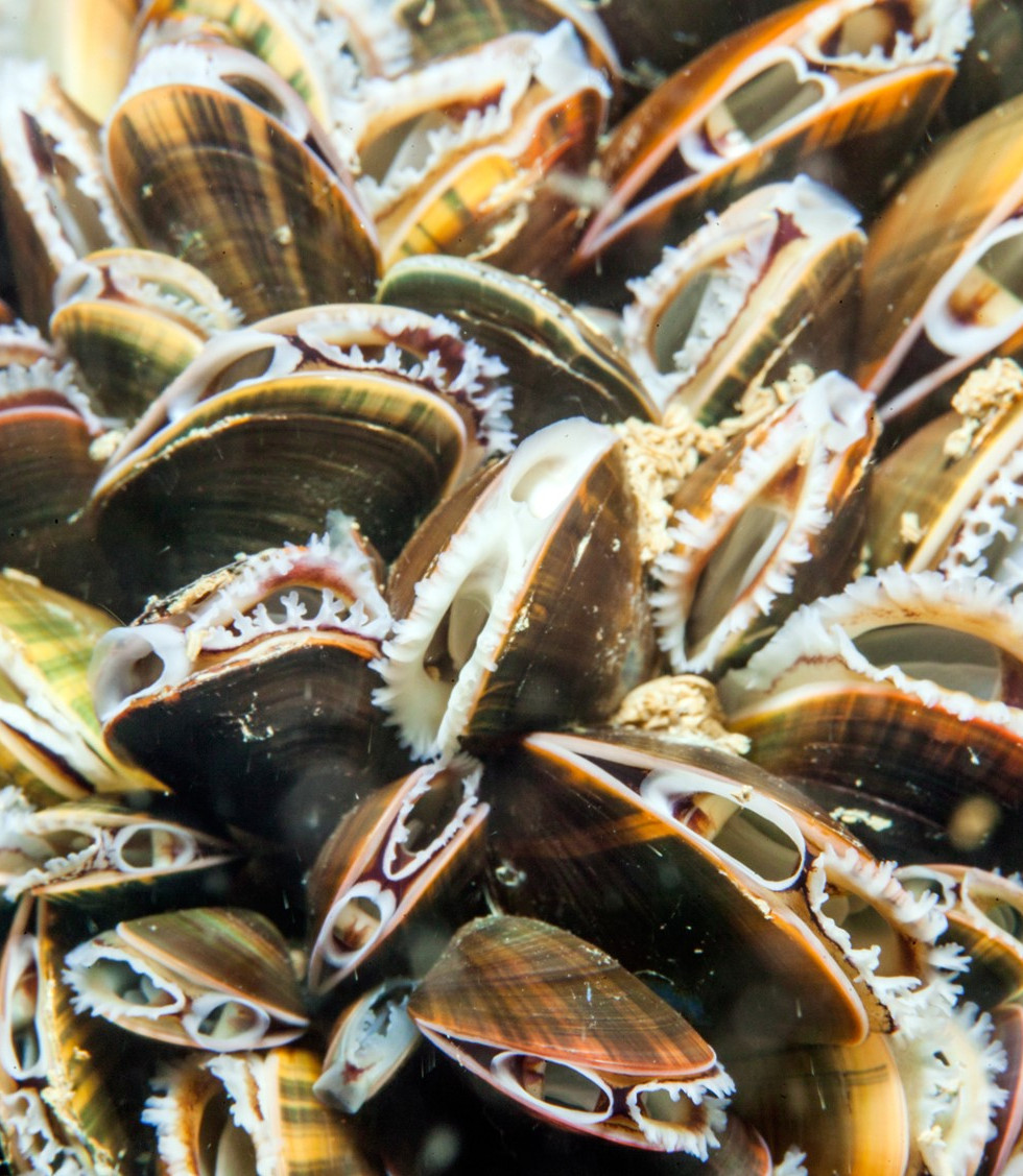 Common Mussels SWW - Paul Kay.jpg