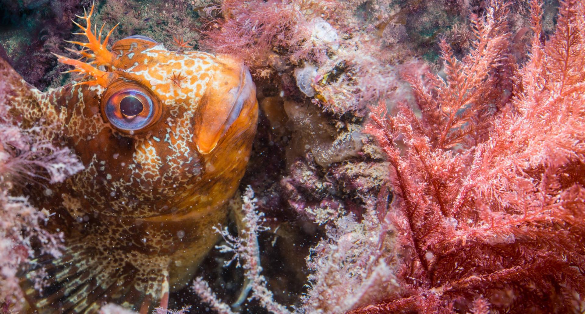 Orange Fish - Paul Kay.jpg