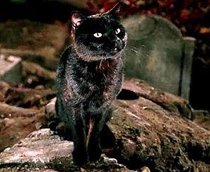 Binx - Hocus Pocus Cat.jpg