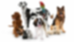 pet dog image - myine - i own it.webp