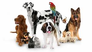 Pet Friendly Hotel.jpg - Petfriendlyyellowpages.com