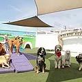 Doogie DayCare Dog Boarding.webp